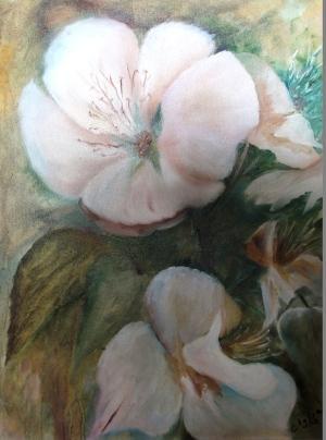Flor-de-Maçã